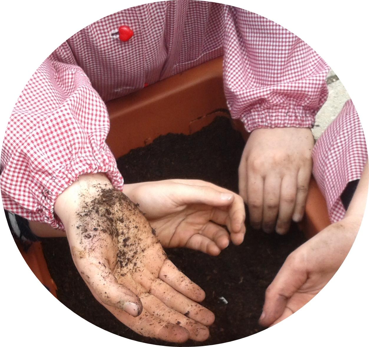 servizi tecnici, hort, analisi fragola, analisi pianta,