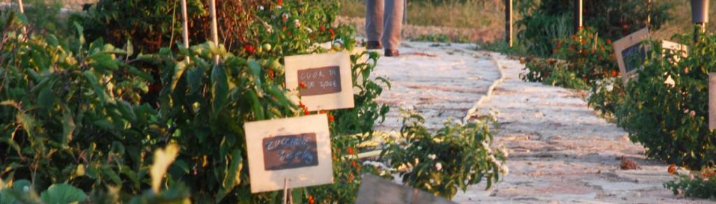 Orto self-service / Self-service vegetable garden - 2011
