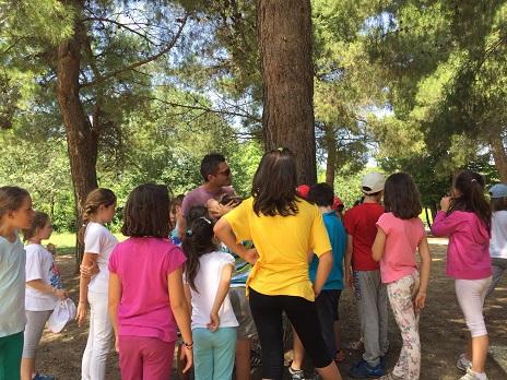 spiegazione albero ai bambini