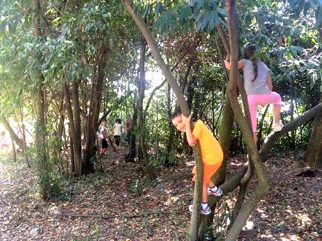 bambini albero